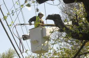man in a bucket cutting a tree