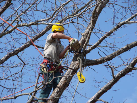 man performing tree care